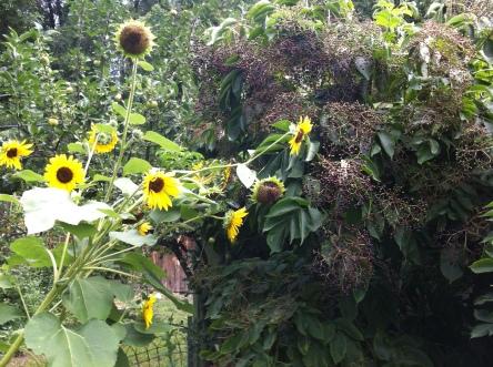 lush abundance