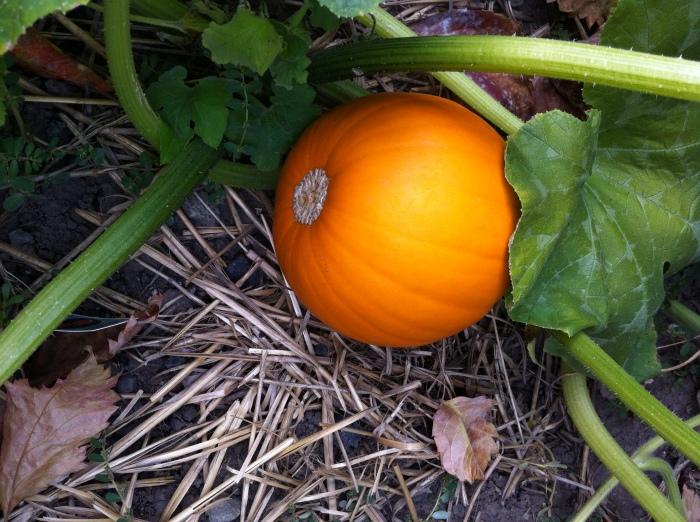 last fall's photo op of the pumpkins