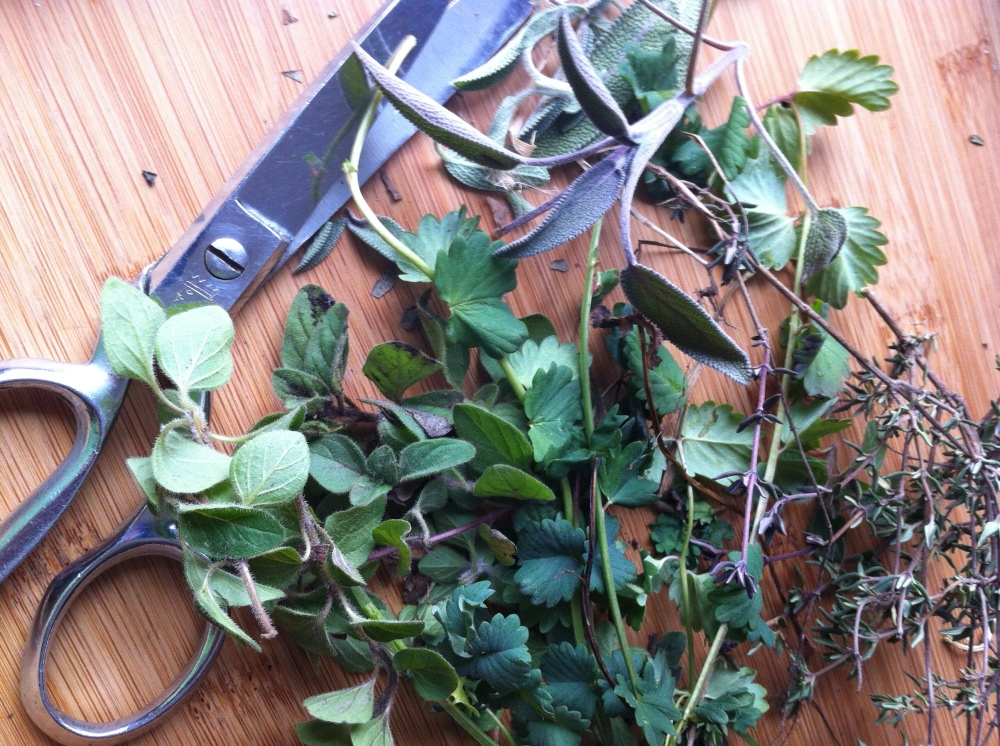sweet find under the leaves: oregano, thyme, sage and burnet