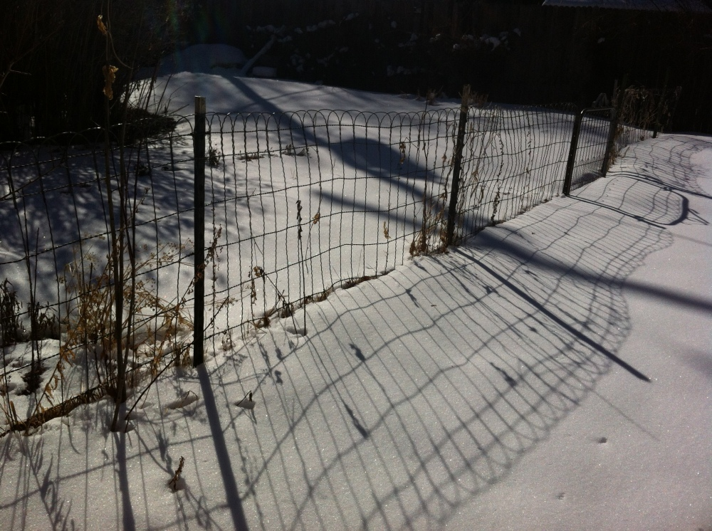 shadows of the garden fence rippling in the sun