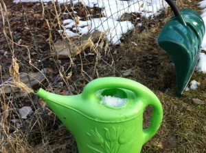 watering can stuffed with snow for tomorrows seeds