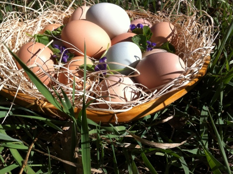 fresh eggs from friends - the sweet life in Paonia, Colorado