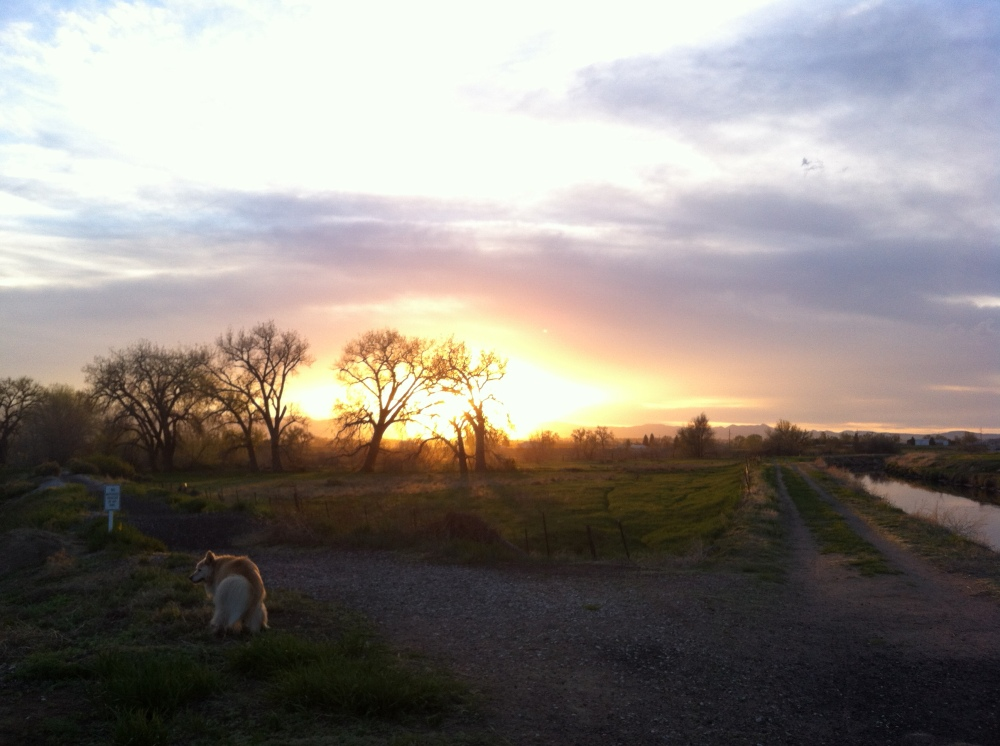 sunset on the meadow with Simon and Loui