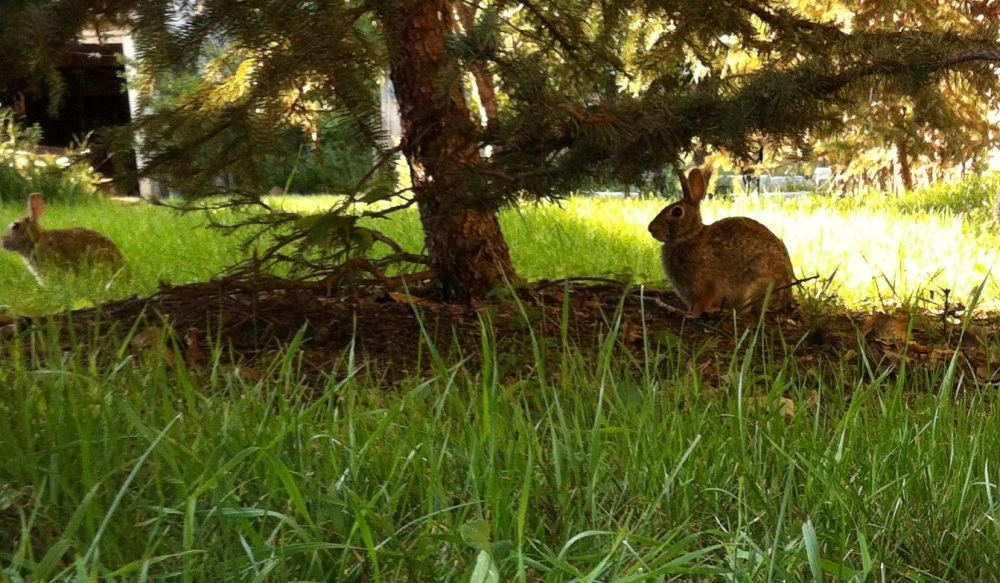 real life Peter Rabbit
