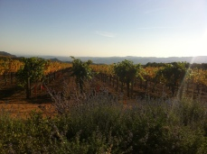 the breathtaking view and golden vineyards at Continuum Estates, Napa Valley