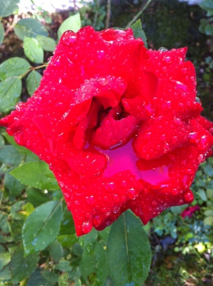 rose after four days of rain/time of the September floods