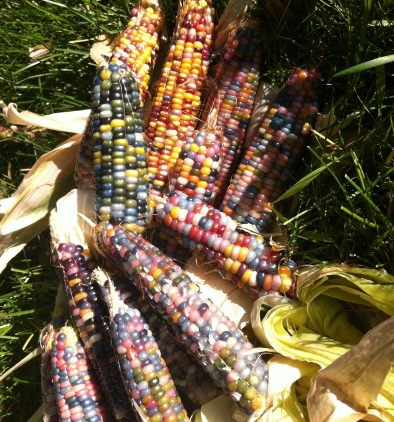 be-jeweled lawn with the Glass Gem corn