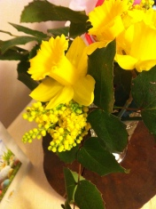 Daffodils and the yellow blooms of Oregon Grape
