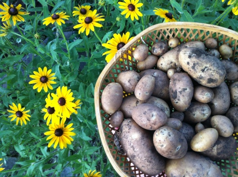 Spuds of Joy