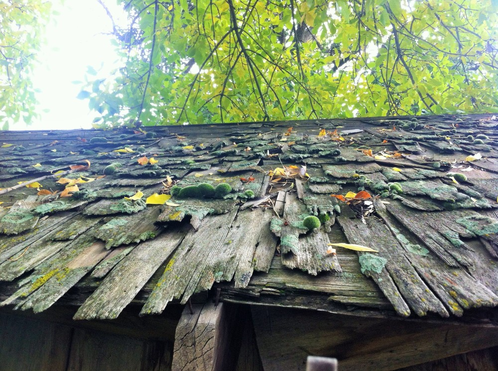 moss studded, picturesque and leaky shed roof