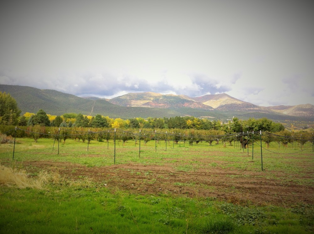 orchard smoothing into foothills