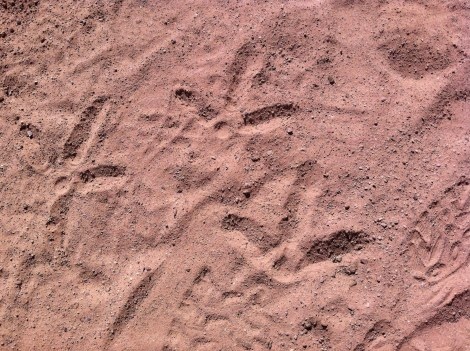 sandhill crane print mosaic in Dominguez canyon